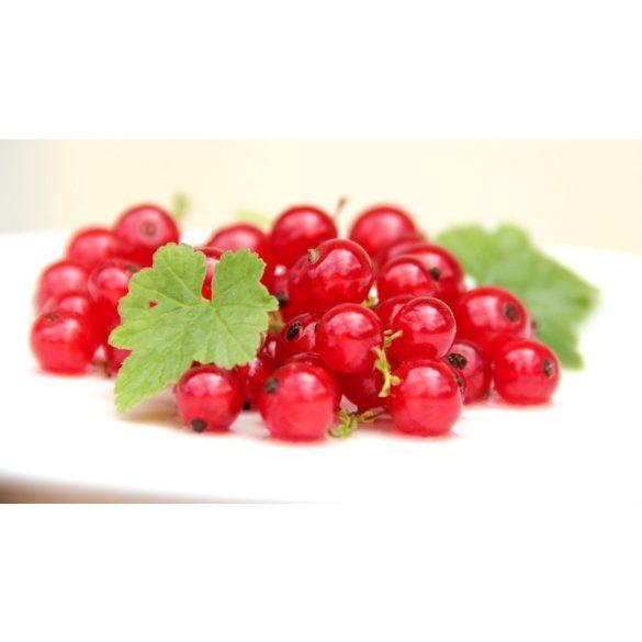 Suc Mere Coacaze Rosu Biofruct 3L